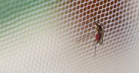 Natural Ways To Get Rid Of Mosquitoes – 10 Methods That Work