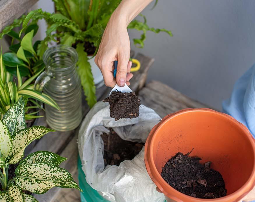 A gardener adding potting soil mix in a terra cotta planter