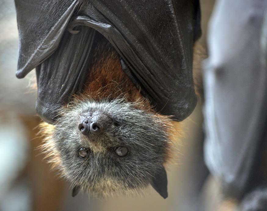 a close-up picture of a bat