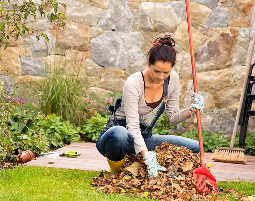 A person raking and removing dried leaves