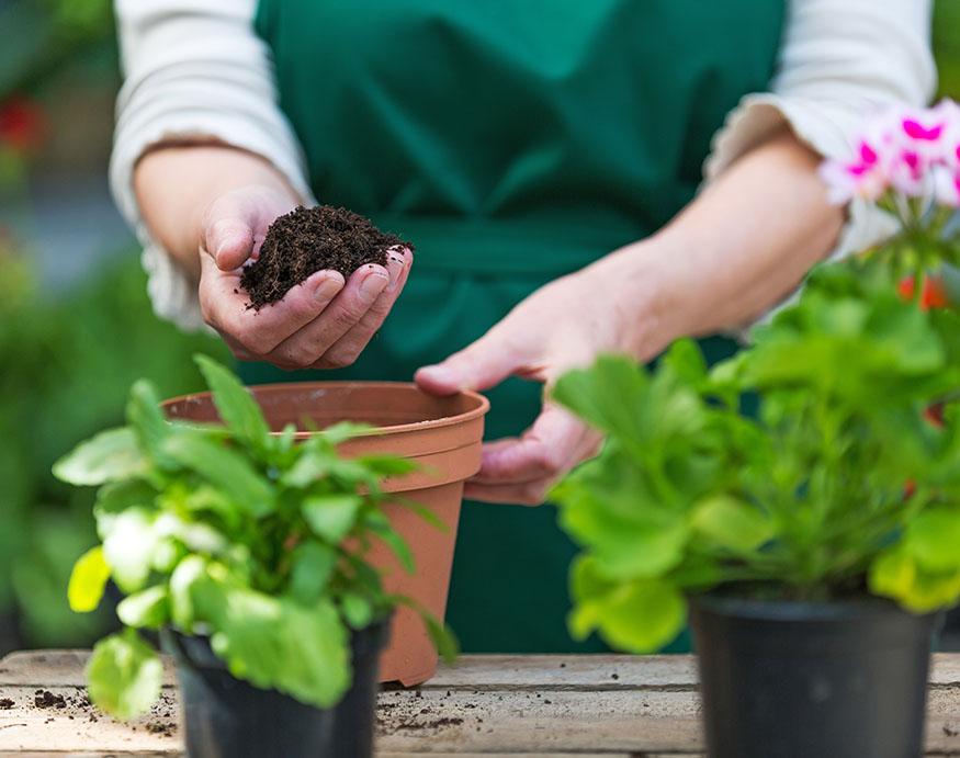 A gardener holding potting soil mix