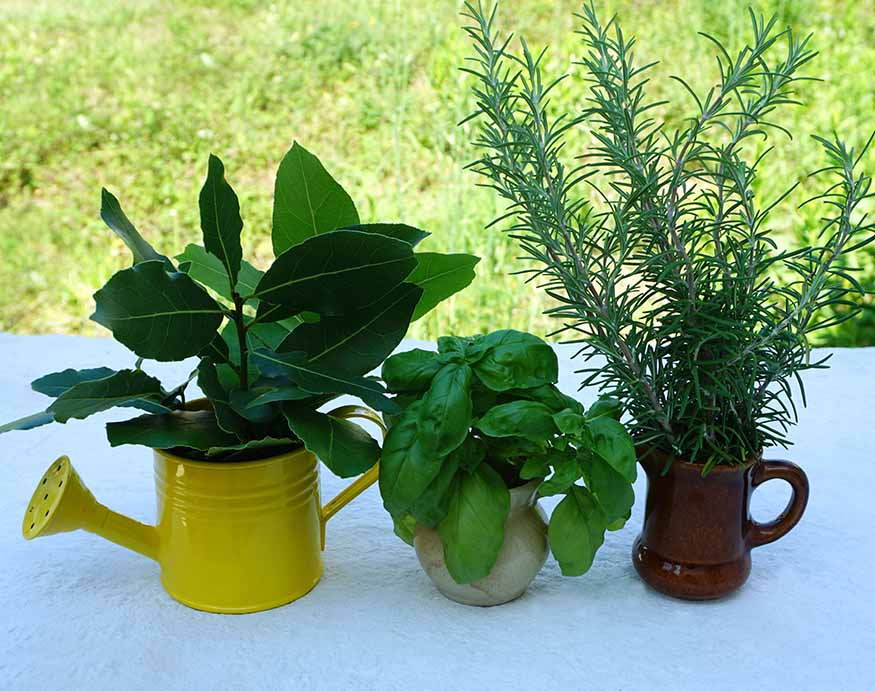 A picture of aromatic herbs