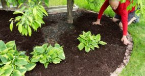 15 Types of Mulch For The Garden and Landscaping