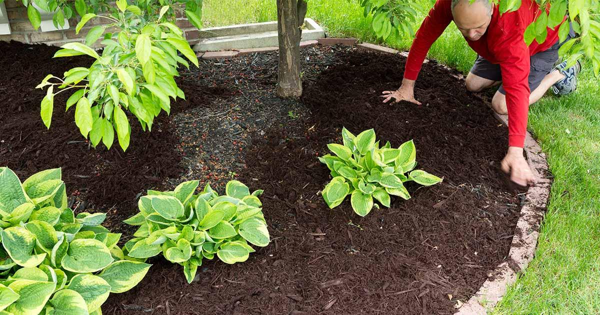 a gardener laying down mulch