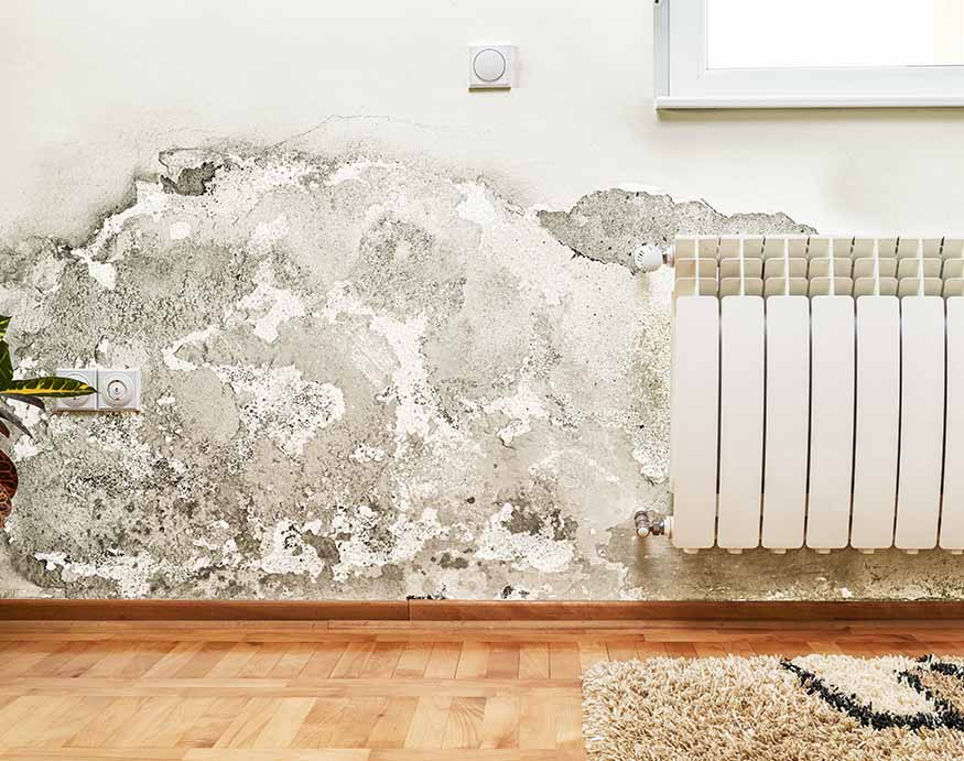 mold and mildew build-up on the wall